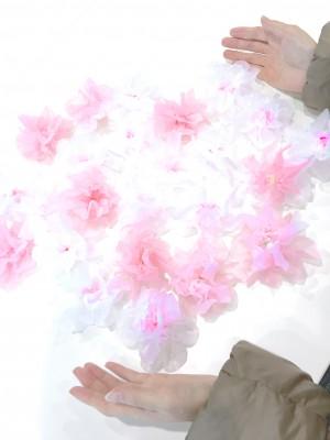 sahotori-sakura 2016-03-09