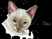 head-cat